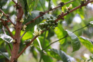 Bean Cluster
