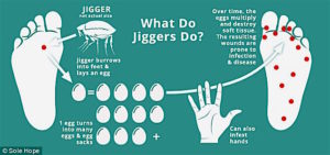 jigger-life-cycle