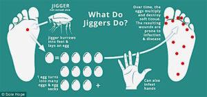 jigger-life-cycle